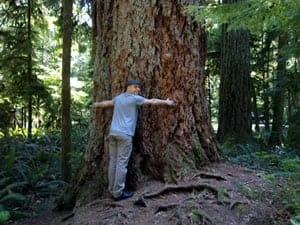 Cathedral Grove Trees