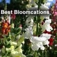 Bloomcations: Best Canadian Gardens Spring marks the beginning of blooms, bee buzz and floral scents in Canadian cities. The coming of spring and summer provides an opportunity for Canadians and […]