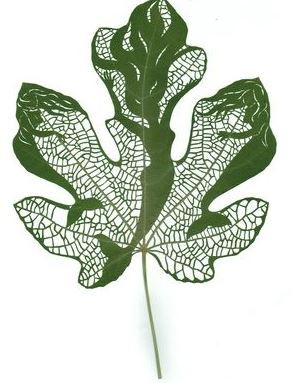 Violent Hippie Leaf Art