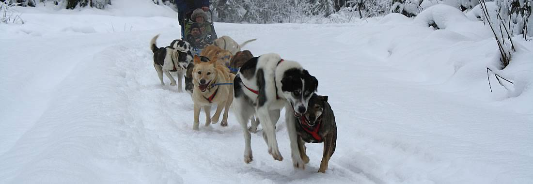 Discover the outdoors by dogsled.