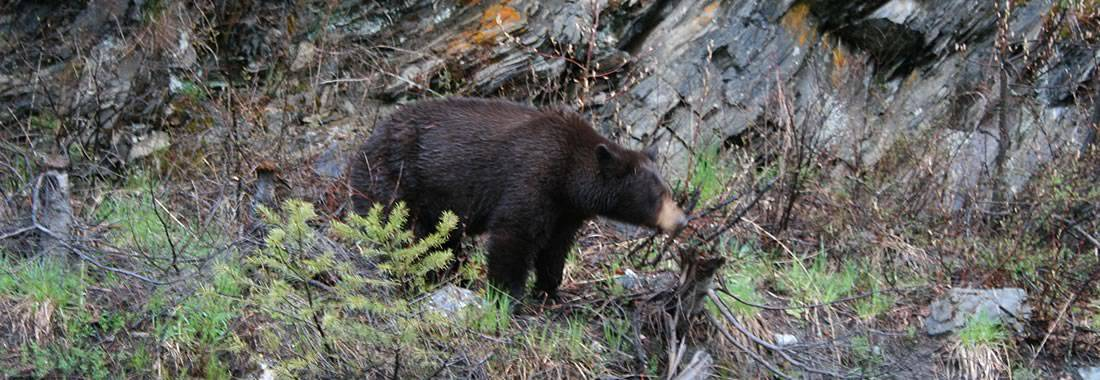 Wildlife Tours British Columbia