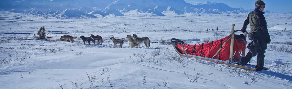 canada attractions tours guides dog sledding