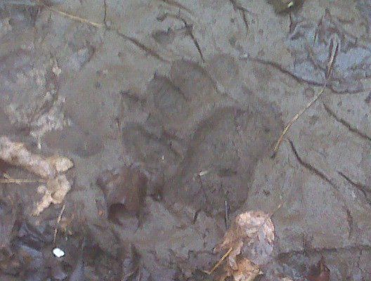 Bear Track!<br />Havelock, Ontario