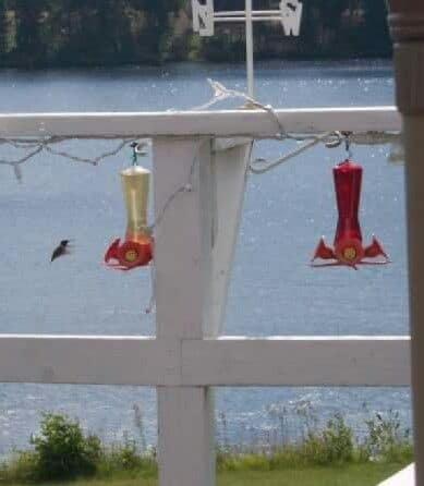Hummingbirds are tricky to get a picture of, but patience paid off. Gatineau, QB