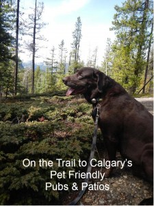 Pet Friendly Outdoor Pubs & Patios in Calgary