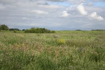 Saskatoon Natural Grasslands