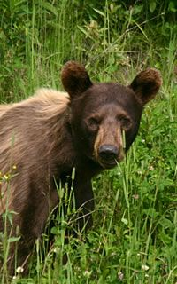 Canada Wildlife Tours and Guides