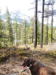 Hike with your dog - Maverick loves to hike