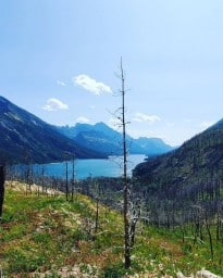 Waterton Lakes National Park  - Since the fire in 2017, it's been a slow but beautiful recovery in the park.  The mountains you see all on the left are actually in the USA.  This is the Bertha Lake trail and just a small peak of the gorgeous views you get from this hike. Beautiful Waterton Lake.